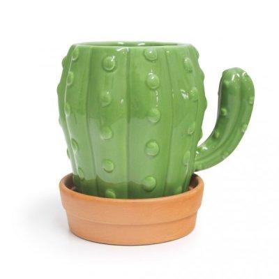 Hrneček – kaktus