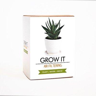 Grow it - květina pro lepší vzduch