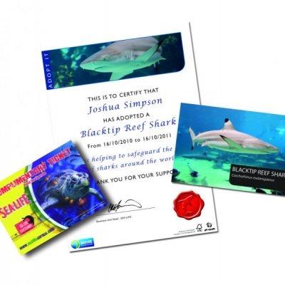 Adoptuj žraloka